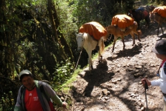 Day-4-Cloud-Forest-Trek-to-Colpa-Lodge-10