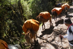 Day-4-Cloud-Forest-Trek-to-Colpa-Lodge-11