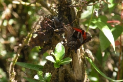 Day-4-Cloud-Forest-Trek-to-Colpa-Lodge-13