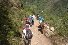 Day-4-Cloud-Forest-Trek-to-Colpa-Lodge-15