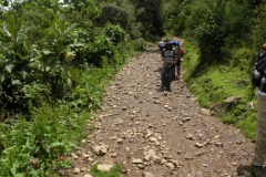 Day-4-Cloud-Forest-Trek-to-Colpa-Lodge-21