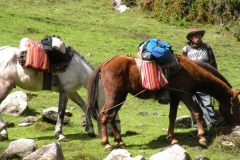 Day-4-Cloud-Forest-Trek-to-Colpa-Lodge-3