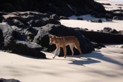 Frazer-Island-2009-40