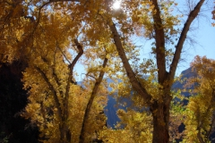 Grand-Canyon-Christmas-2006-28