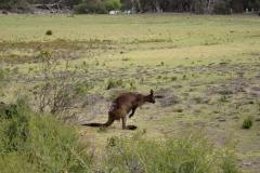 Australia-2006-88