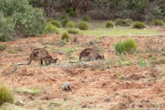 Australia-2006-90