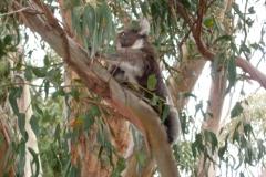 Australia-2006-91