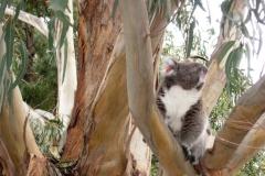 Australia-2006-93