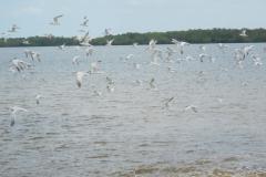 Naples-Florida-2012-1
