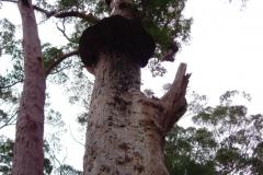 Australia-2006-18