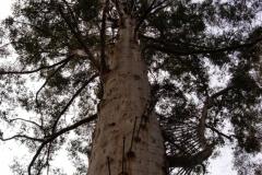 Australia-2006-9