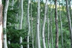 Vale-Colorado-2006-12