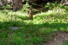 Vale-Colorado-2006-5