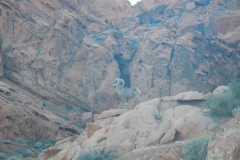Valley-of-Fire-Nevada-2015-40