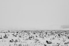 Yellowstone-Fall-2017-31