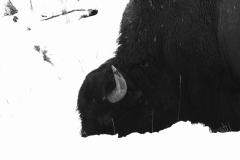 Yellowstone-Fall-2017-49