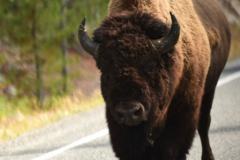 Yellowstone-Fall-2017-64