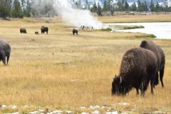 Yellowstone-Fall-2017-66