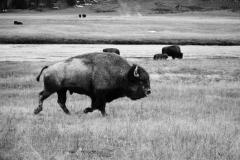 Yellowstone-Fall-2017-67
