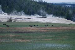 Yellowstone-2008-1