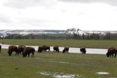 Yellowstone-2008-10