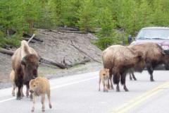 Yellowstone-2008-13