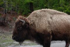 Yellowstone-2008-14