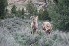 Yellowstone-2008-24