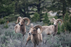 Yellowstone-2008-25