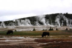 Yellowstone-2008-3