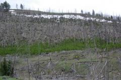Yellowstone-2008-42