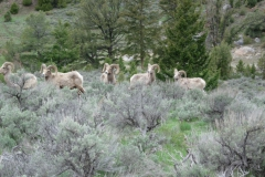 Yellowstone-2008-43