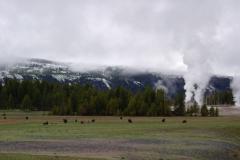 Yellowstone-2008-5