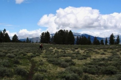 Yellowstone-2008-57