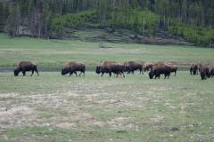 Yellowstone-2008-6