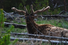 Yellowstone-2008-63