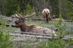 Yellowstone-2008-64