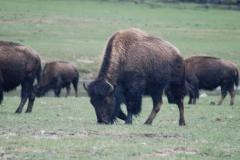 Yellowstone-2008-8