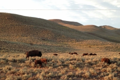 Yellowstone-Summer-2016-35
