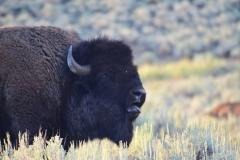 Yellowstone-Summer-2016-36
