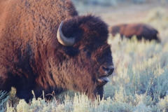Yellowstone-Summer-2016-37