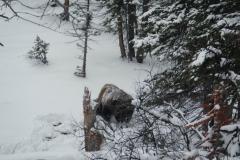 Yellowstone-Winter-2014-10