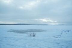 Yellowstone-Winter-2014-25