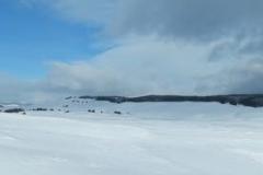 Yellowstone-Winter-2014-28