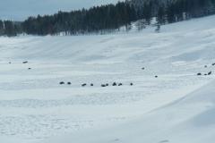 Yellowstone-Winter-2014-29