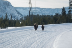 Yellowstone-Winter-2014-52