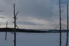 Yellowstone-Winter-2014-54