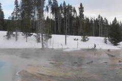 Yellowstone-Winter-2014-56