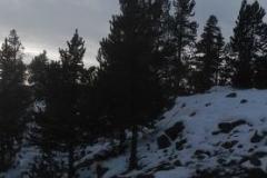 Yellowstone-Winter-2014-57