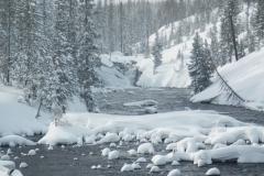 Yellowstone-Winter-2014-6